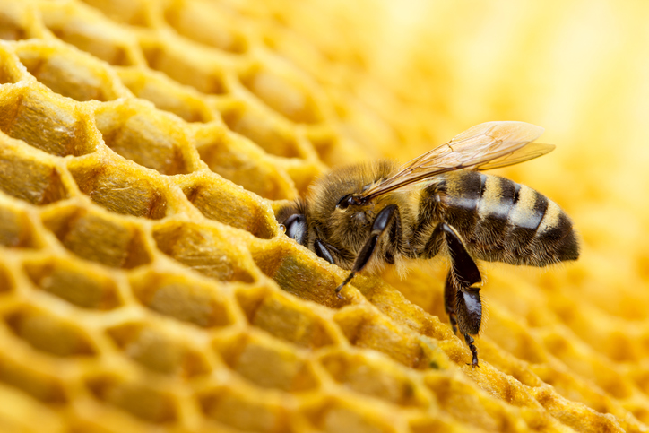 how do honey bees make beeswax and comb